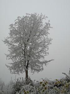 photo copyright Miroslav Vajdić